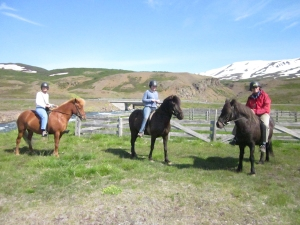 On the Icelandic horses