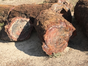 PetrifiedLogs